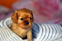 puppy girl 1