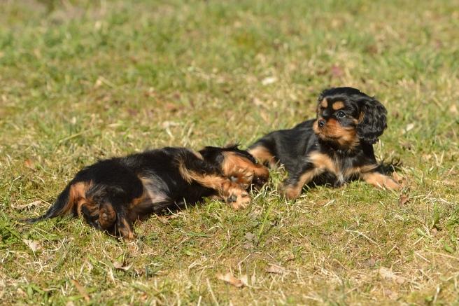 Suņa uzvedības problēmas un kā tās risināt