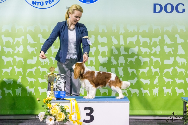 National Dog Show in Tartu (08.01.2017)