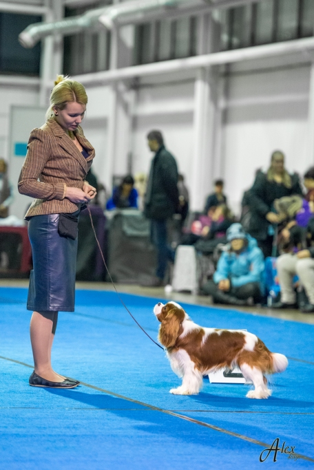 JCH National Dog Show in Tartu (07.01.2017) BIG 4
